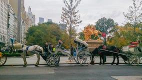 Μανχάταν και άλογα στοκ εικόνα με δικαίωμα ελεύθερης χρήσης