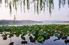 Μαξιλάρια κρίνων στη λίμνη Hangzhou, Κίνα Στοκ Φωτογραφίες