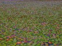 Μαξιλάρια κρίνων στο νερό Στοκ εικόνες με δικαίωμα ελεύθερης χρήσης