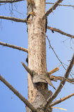 Μαραίνομαι-δέντρο Στοκ φωτογραφία με δικαίωμα ελεύθερης χρήσης