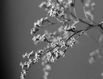 Μαραμένη ανθοδέσμη με τα μικρά άσπρα ξηρά λουλούδια και γραπτό στενό επάνω κλάδων Στοκ Εικόνες