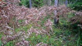 Μαραμένοι θάμνοι στο δάσος φιλμ μικρού μήκους