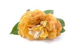 Μαραμένο λουλούδι Στοκ φωτογραφίες με δικαίωμα ελεύθερης χρήσης