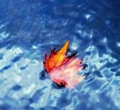 Μαραμένο φθινόπωρο φύλλο στο ύδωρ Στοκ Φωτογραφίες