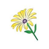 μαργαρίτα Στοκ εικόνα με δικαίωμα ελεύθερης χρήσης