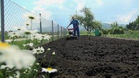Μαργαρίτες που αυξάνονται εκτός από το καλλιεργημένο έδαφος φιλμ μικρού μήκους