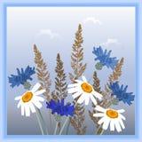 Μαργαρίτες, cornflowers και spikelets Στοκ Εικόνες