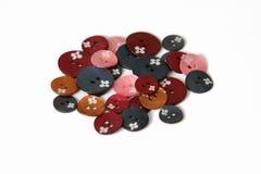 μαργαριτάρι κουμπιών Στοκ φωτογραφίες με δικαίωμα ελεύθερης χρήσης