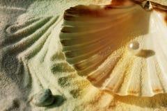 Μαργαριτάρι στο θαλασσινό κοχύλι Στοκ Εικόνες