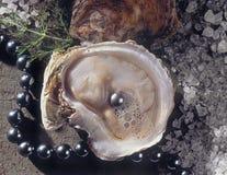 μαργαριτάρι στρειδιών Στοκ Φωτογραφίες