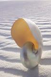 μαργαριτάρι nautilus Στοκ Εικόνες