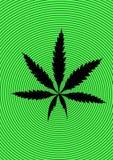 μαριχουάνα κάνναβης καννά&beta Στοκ Φωτογραφία