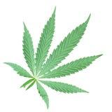 Μαριχουάνα κάνναβης Στοκ φωτογραφία με δικαίωμα ελεύθερης χρήσης
