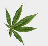 μαριχουάνα φύλλων Στοκ Φωτογραφίες