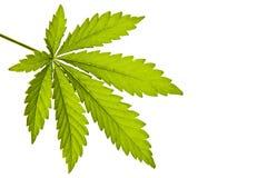 μαριχουάνα Στοκ Εικόνα