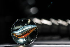 Μαρμάρινη μακροεντολή γυαλιού Στοκ Εικόνα