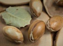 Μαροκινά argan καρύδια στην ξύλινη κινηματογράφηση σε πρώτο πλάνο υποβάθρου Στοκ Εικόνα