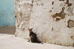 Μαροκινή γάτα Στοκ εικόνες με δικαίωμα ελεύθερης χρήσης