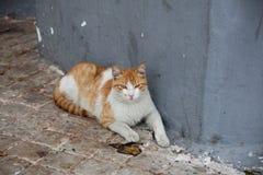 Μαροκινή γάτα Στοκ φωτογραφία με δικαίωμα ελεύθερης χρήσης