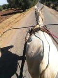 Μαροκινή κινητικότητα στα χωριά Στοκ φωτογραφία με δικαίωμα ελεύθερης χρήσης