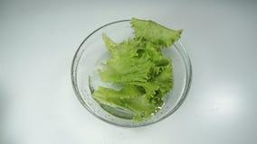 Μαρούλι που πέφτουν και παφλασμοί νερού, σε αργή κίνηση Φρέσκα πράσινα φύλλα μαρουλιού σε ένα κύπελλο γυαλιού σε μια άσπρη επιφάν φιλμ μικρού μήκους