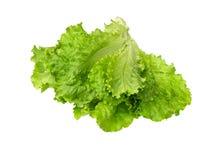 Μαρούλι φρέσκο Φύλλο σαλάτας Φρέσκα πράσινα φύλλα μαρουλιού Στοκ εικόνες με δικαίωμα ελεύθερης χρήσης