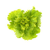 Μαρούλι φρέσκο Φύλλο σαλάτας Φρέσκα πράσινα φύλλα μαρουλιού Στοκ Φωτογραφίες