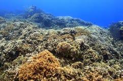 μαρούλι φύλλων πεδίων κοραλλιών λεπτό Στοκ φωτογραφία με δικαίωμα ελεύθερης χρήσης