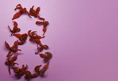 8 Μαρτίου από τα κόκκινα λουλούδια σε ένα ανοικτό ροζ υπόβαθρο η κάρτα ανθίζει τους χαιρ&e διάνυσμα κειμένων θέσεων απεικόνισης α Στοκ Εικόνες
