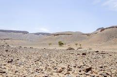 Μαρόκο, κοιλάδα Draa, πέτρινα έρημος και δέντρο ακακιών Στοκ εικόνες με δικαίωμα ελεύθερης χρήσης