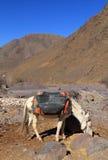 Εθνικό πάρκο Μαρόκο Toubkal μουλαριών πακέτων Στοκ φωτογραφία με δικαίωμα ελεύθερης χρήσης