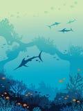 Μαρλίν, υποβρύχια θάλασσα, κοραλλιογενής ύφαλος Στοκ Εικόνες