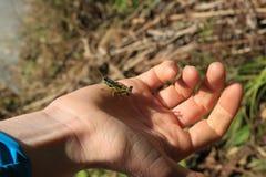 Μας πέστε το όραμά σας παλαιό grasshopper στοκ φωτογραφία