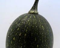 Μαυριδερός πράσινος αυγών Goblin Στοκ Φωτογραφίες