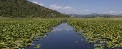 Μαυροβούνιο, λίμνη Skadar Στοκ Φωτογραφίες