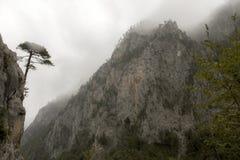 Μαυροβούνιο Εθνικό πάρκο Durmitor Φαράγγι ποταμών της Tara στοκ εικόνα με δικαίωμα ελεύθερης χρήσης