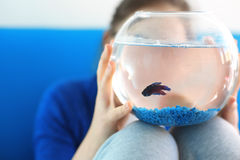 Μαχητής, λίγο μπλε ψάρι Στοκ Φωτογραφία