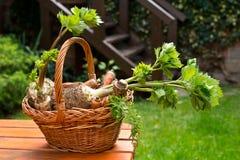 Μαϊντανός, σέλινο και καρότα Στοκ Φωτογραφίες