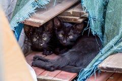 μαύρα γατάκια δύο στοκ εικόνες με δικαίωμα ελεύθερης χρήσης