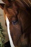 Μαύρα και καφετιά άλογα στο στάβλο και το λιβάδι Στοκ Φωτογραφίες
