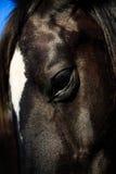 Μαύρα και καφετιά άλογα στο στάβλο και το λιβάδι Στοκ εικόνα με δικαίωμα ελεύθερης χρήσης