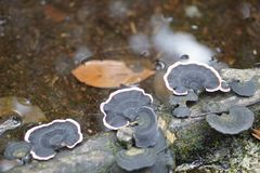Μαύρα και ρόδινα μανιτάρια στοκ φωτογραφία με δικαίωμα ελεύθερης χρήσης