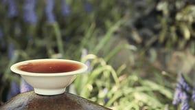 Μαύρα κινεζικά λουλούδια κήπων τσαγιού φιλμ μικρού μήκους