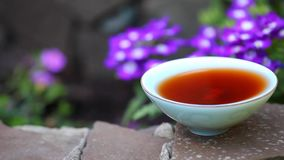 Μαύρα κινεζικά λουλούδια κήπων τσαγιού απόθεμα βίντεο