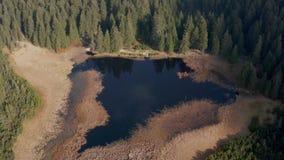 Μαύρα λίμνη και έλη, δάσος στο υπόβαθρο στο βουνό Pohorje, Σλοβενία φιλμ μικρού μήκους