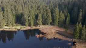 Μαύρα λίμνη και έλη, δάσος στο υπόβαθρο στο βουνό Pohorje, Σλοβενία απόθεμα βίντεο