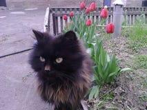 μαύρα λουλούδια γατών Στοκ Εικόνες