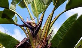 Μαύρα λουλούδια που βγαίνουν από ένα μικρό τροπικό δέντρο στοκ φωτογραφία με δικαίωμα ελεύθερης χρήσης
