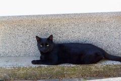 μαύρα μάτια γατών κίτρινα στοκ φωτογραφίες με δικαίωμα ελεύθερης χρήσης