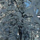 μαύρα μπλε τονισμένα άσπρα τοπίο χειμερινά δάση φωτογραφιών διαβάσεων πεζών Στοκ Εικόνες
